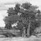 В. Нилов. Два дерева. 2010. офорт, акватинта