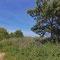 Vegetation am Rundweg