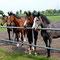 Die Rentner und jungen Ponys