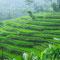 Unterwegs zwischen Bandung und Yogyakarta. Auf jeder freien Fläche wird Reis angebaut. In Indonesien leben auch ca. 240 Millionen Menschen.