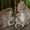 """Der """"Affenwald"""" von Ubud. Auf den Fotos sieht alles so friedlich aus. Aber hier musste ich meine Fotoausrüstung mit Hände und Füssen verteidigen."""