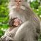 """Der """"Affenwald"""" von Ubud. So, genung Affen. Jetzt geht es nach Sanur."""