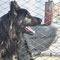 Fulvio noch im Tierheim in Canalba