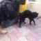 """Fulvio beim """"Katzentest"""" noch im Tierheim in Canalba"""