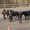 Tanja, Elisabeth und Kathi mit ihren Pferden nach dem T7 Bewerb
