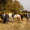 Eine kleine Pause tut Pferd und ReiterInnen gut...