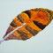 「羽」  F0 キャンバス(180×140mm)        刺繍