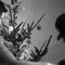 Tradiotionelles Weihnachtsbaumschmücken am 24.Dezember...