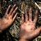 Corteros de caña de azucar en el Valle del Cauca © Margarita Mejía F o t ó g r a f a