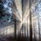 Strahleneffekte im Wald südöstlich von Breitmatt.