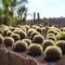 Cactus Park, Teneriffa, Spanien