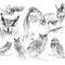 Planche Le Hibou - Crayon noir sur papier - 50 x 40 cm - 2013<br><br>Illustration . dessin . animalier . animal