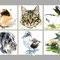 Carte vétérinaire - Encre couleur et crayon noir sur papier - 30 x 20 cm - 2014<br><br>Illustration . dessin . animalier . animal . chat . chien . hamster . tortue . lapin . fou à pieds bleus