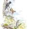 Faune des Hautes-Vosges -  Illustration Gazette de la Schlucht N°7 - Encre couleur et trait noir sur papier - 2015<br><br>Illustration . dessin . hautes Vosges . montagne . chamois . pic noir . lézard