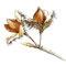 Fruits du hêtre - Encre couleur et crayon noir sur papier - 15 x 15 cm - Panneau Sentier Arboretum du Lac Blanc (68) - 2010<br><br>Illustration . dessin naturaliste . peinture