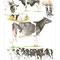 Dipôme concours vache race Prim'Holstein - Eurogénétique 2013 - Encre couleur et crayon noir sur papier - 40 x 50 cm<br><br>Illustration . dessin . animalier . animal
