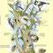 L'Arbre mort ? - Illustration à l'encre couleur et crayon noir sur papier pour impression sur panneau pédagogique - Sentier de la Grand'Roche - Cornimont (88) - 2005<br><br>Illustration . dessin naturaliste . peinture