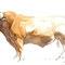 Taureau Limousin - Encre couleur et crayon noir sur papier - 30 x 20 cm - 2010<br><br>Illustration . dessin . animalier . animal