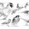 Planche Le Faucon - Crayon noir sur papier - 40 x 30 cm - 2013<br><br>Illustration . dessin . animalier . animal
