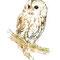 Chouette hulotte - Encre couleur et crayon noir sur papier -15 x 21 cm - 2012<br><br>Illustration . dessin . animalier . animal