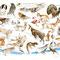 Hautes-Vosges Sauvages - Image d'Epinal - 65 x 50 cm - 2010<br><br>Artiste peintre . illustrateur . imagier . illustration à thème . dessin animalier . planche animalière . faune des hautes vosges . animaux vosges