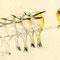 Guépiers -  Encre couleur et crayon noir sur papier - Cartes de voeux Imagerie d'Epinal - 2008<br><br>Illustration . dessin . animalier . animal