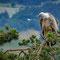 André Tabare : Le Vautour et la plume