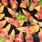 Melonenhäppchen mit Parmaschinken