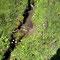 petit écoulement caractéristique en alpage, photo RF