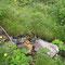 Dactylorhiza parvimajalis, photo RF