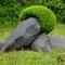 buis et schiste, 2012, jardin privé, Bompas (66)