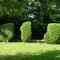 buis taillés, depuis 2002, jardin privé (47)