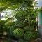 buis taillé, jardin privé, Lavaur