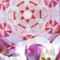 Mandala und Orchideen