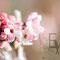 Winterschneeballblüte