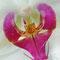 Orchidee Nahaufnahme