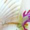 Muschel und Orchidee