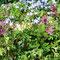Frühlingsblumenwiese