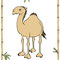 Kamel - Vektorgrafik