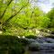 島根の熊のいる渓/天然林を残こす活動が行われている