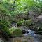 天然林に覆われる渓相
