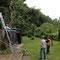 10.6.2012 Baum fällt!