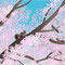 桜咲くエゾリス