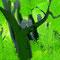 フクロウの森1