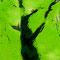 木漏れ日エゾリス