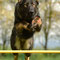 Bruce - Fotoshooting mit Gaby Brockers von Dogs Cottage Pictures