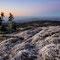 Nördliche Winde bringen Frost