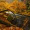 Die Herbstfärbung auf ihrem Höhepunkt.