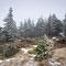 Ihr kalter Hauch treibt ersten Schnee durch die Fichtenwälder der Brockenschulter