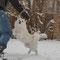 27.12.2014: das erste Mal im Schnee...